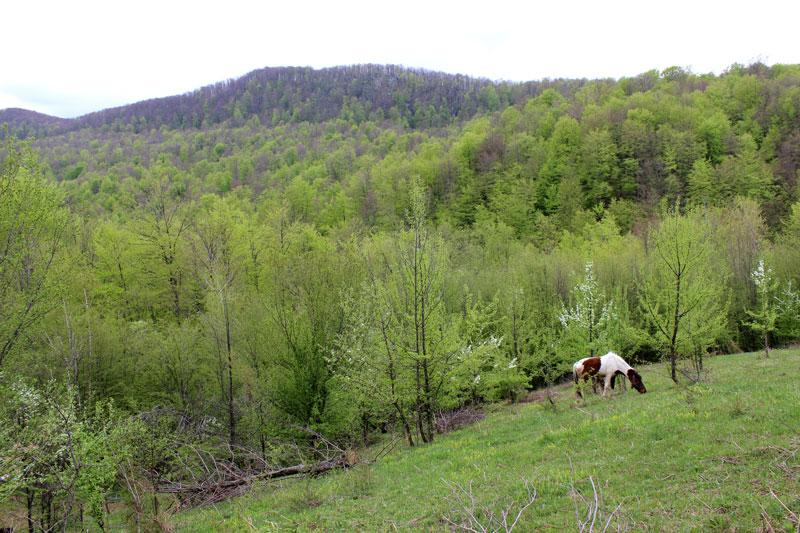 Am Hang in den Bergen um Srebrenica.Foto: J.Behrens